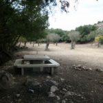 חניון לילה - חוות משמר הכרמל